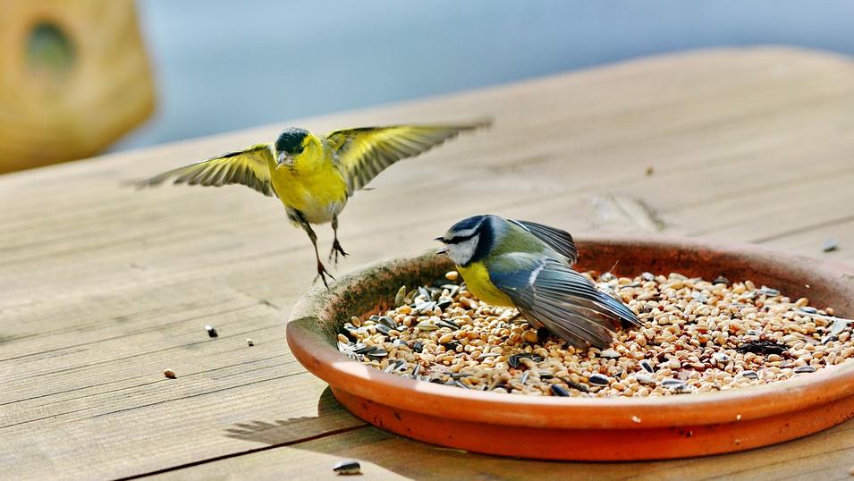 Vogelfutter - was den Vögeln im Winter wirklich hilft